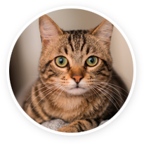 revolt topical (selamectin) for cats & kittens